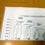 Pingwin Elegancik